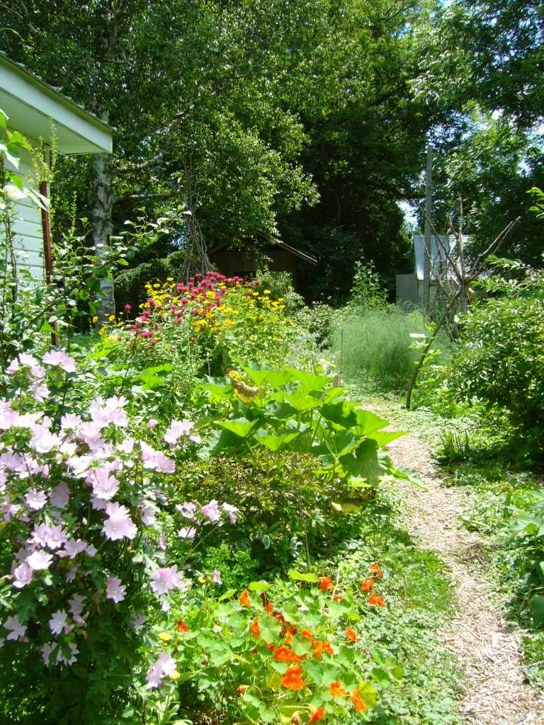 edible forest garden, perennial and annual polycultures