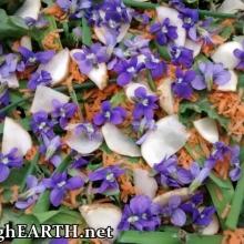 spring salad <3