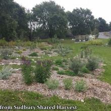 photo courtesy of Sudbury Shared Harvest